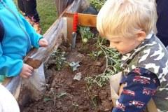 Pěstujeme a pečujeme o záhonky